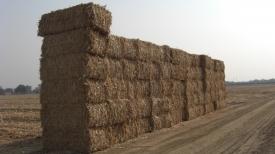 Corn Stover Bales